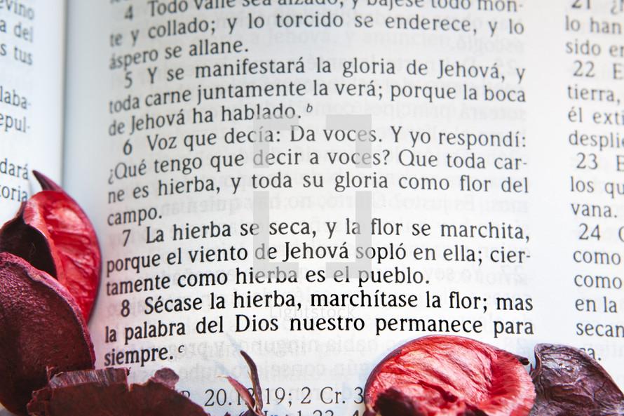 Red flower petals surrounding Spanish Bible scripture verse.