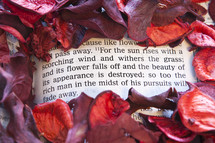 Red flower petals surrounding Bible open to James 1:11.