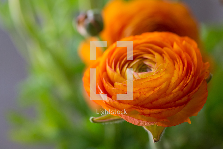 bouquet of orange flowers