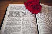A red rose on the pages of a Bible.