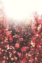 sunlight on spring flowers