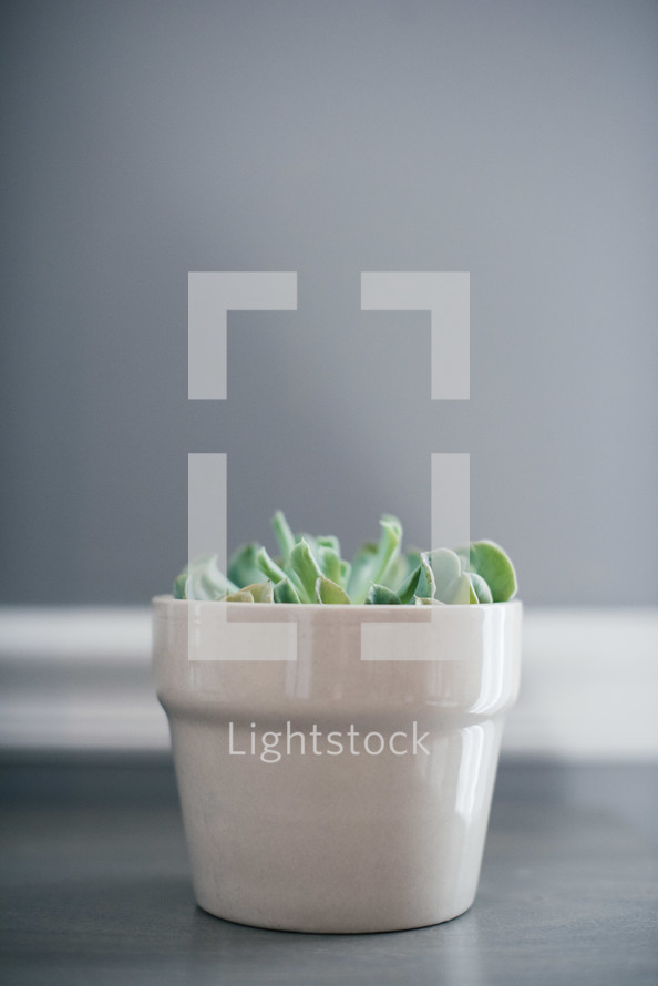 house plant on a gray wood table
