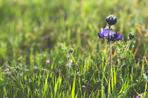 spring wildflowers in grass