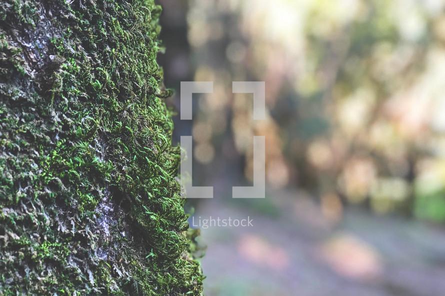 moss and bokeh sunlight
