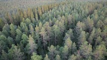 Drone flying over an evergreen forest