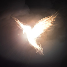holy spirit in the form of a dove