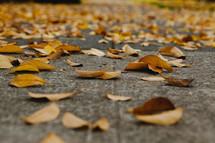 Yellow leaves on a sidewalk.