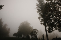 Trees on a foggy day.
