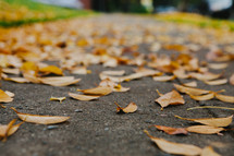 A sidewalk covered in yellow, fall leaves.