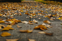 Yellow leaves cover a sidewalk.