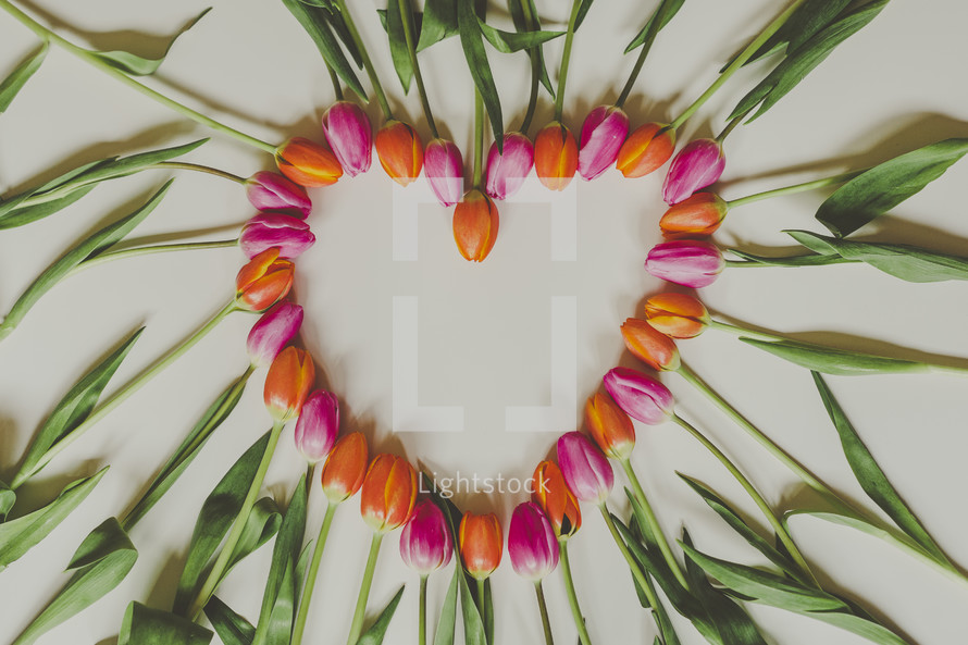 heart shape out of tulips