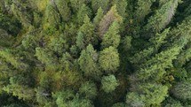 aerial view over an evergreen forest