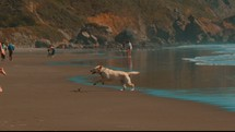dog running in slow motion on a beach