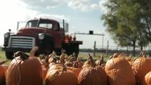 Vintage truck by a pumpkin patch.