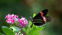 butterfly flapping its wings