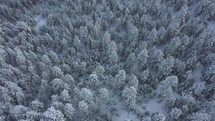 aerial view over snow covered forest