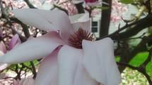 backyard flowers on a tree