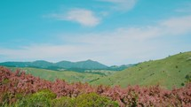 wildflowers blowing in the breeze and rolling hills