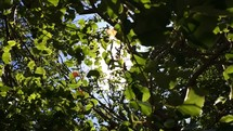 Sunlight through the leaves of a summer tree.