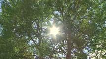 Timelapse of sun shining through the trees.