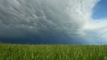 Storm cloud moving in over a grassy field.