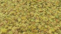Autumn leaves blowing on the ground.