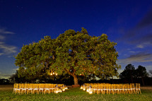 Wedding party under tree