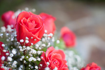 closeup of roses in a vase
