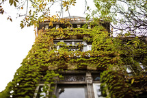 ivy growing up a building