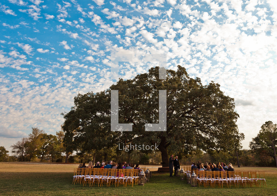 Wedding party under a large tree