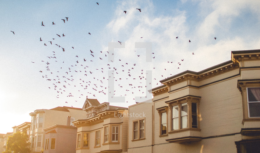 Birds flying over houses
