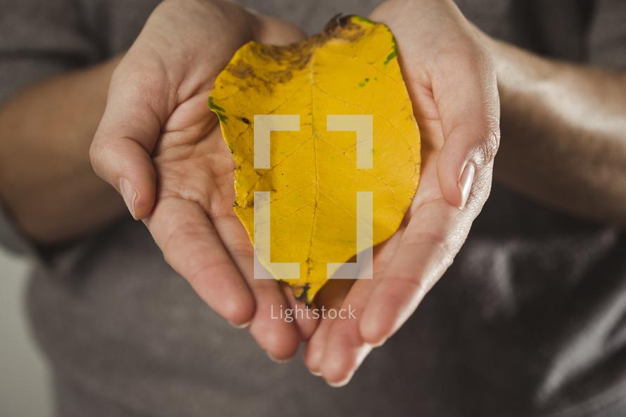 hands, cradling a leaf