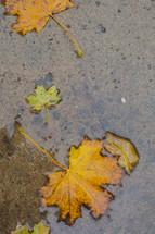 fall leaves on a wet sidewalk