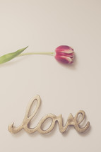 tulip and word love