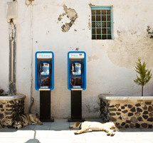 two dogs lying under phone booths