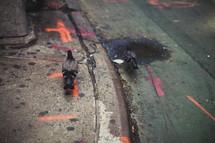 pigeons on a city sidewalk