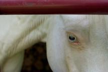 a horse's eye