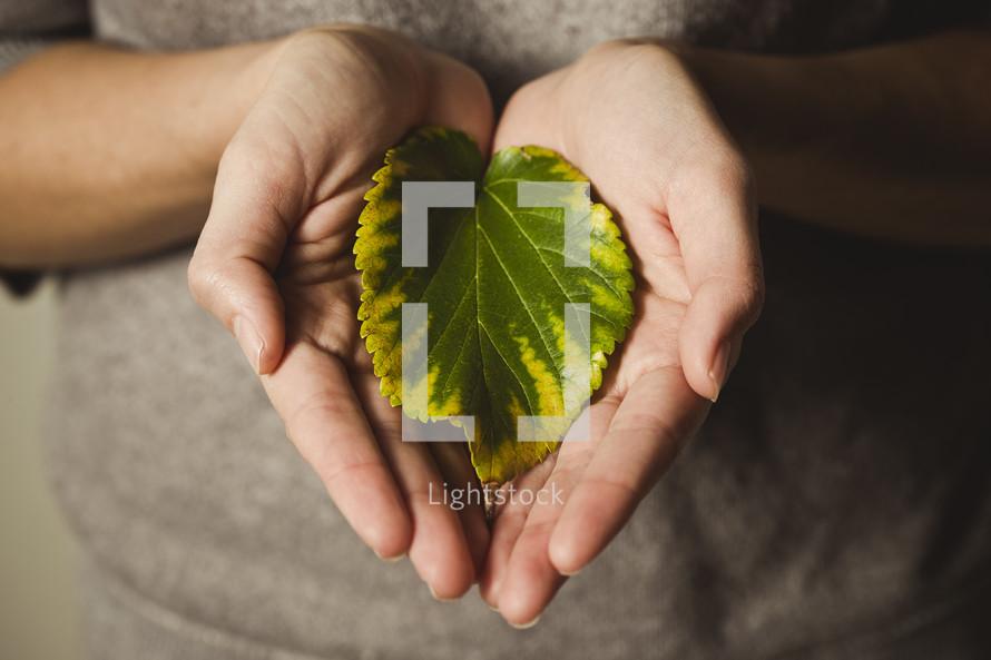hands cradling a leaf