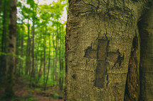 cross carved in a tree