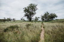 worn path on a grassing hillside
