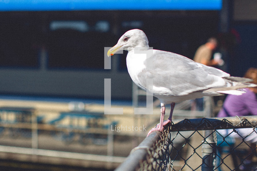 Seagull on fence