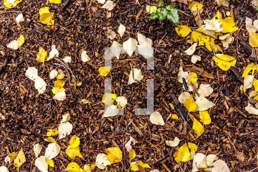 yellow and white leaves on a bed of bark and dirt in the fall