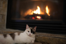 Spotted cat by fireplace
