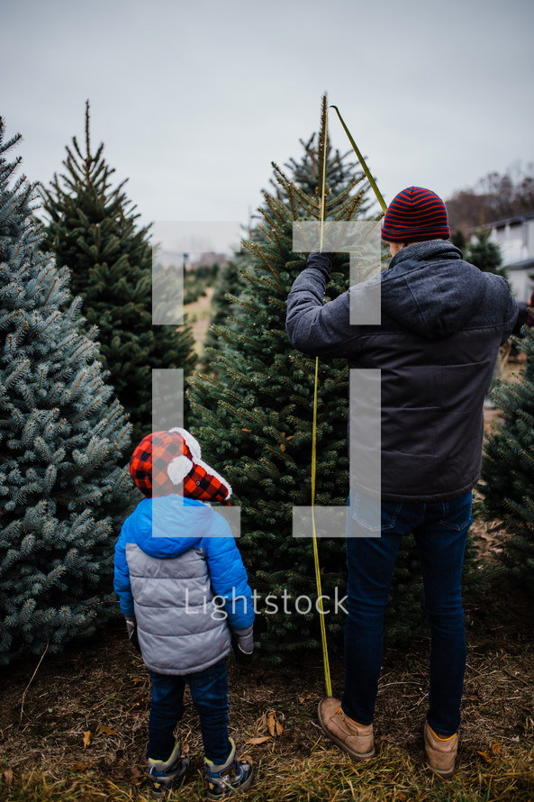 father and son in a Christmas tree farm