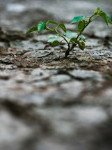 a plant growing in dry ground