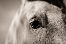 Closeup on horses eye