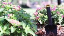 Planting flowers in a flower bed,