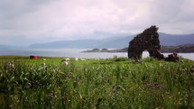 Iona ruins in a field of grass with a herd of sheep.