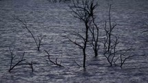 trees in a lake