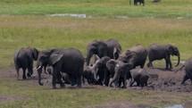 elephants and ox